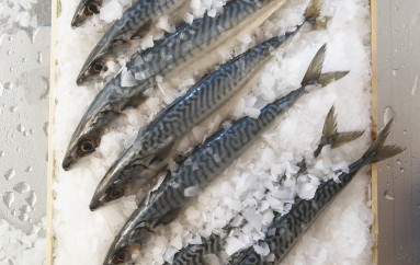 Oil anchovies Cetara