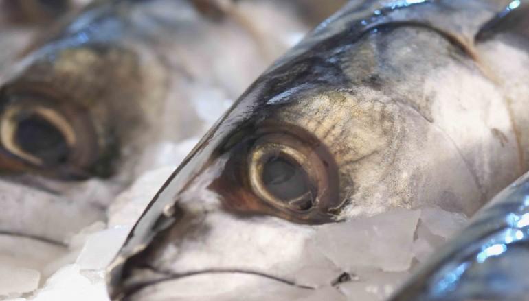 El aceite de las anchoas de Cetara