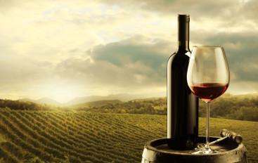 Vinos naturales… la nueva tendencia