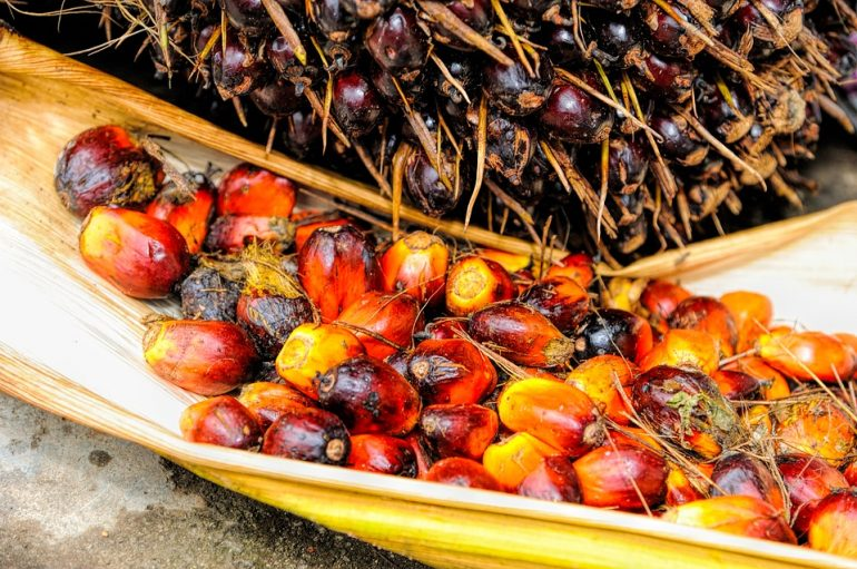 ¿Por qué es malo el aceite de palma?
